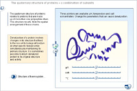 The quaternary structure of proteins – a combination of subunits