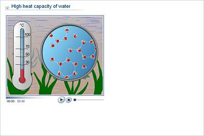 Biology - Upper Secondary - YDP - Animation - High heat capacity ...