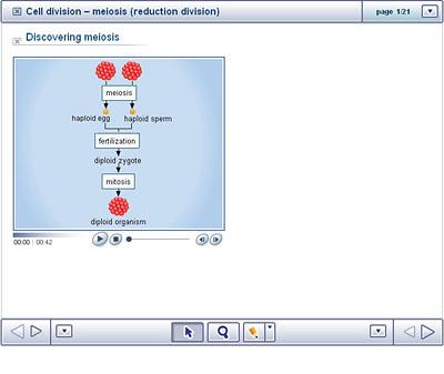 meiosis reduction