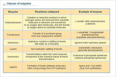hydrolase enzyme example