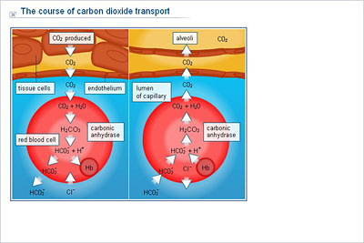 a study of carbon dioxide carbon dioxide understanding and production in elodea, snail, and goldfish introduction this report discusses an experiment to study the rate of aerobic cellular respiration in aquatic organisms which are elodea (aquatic plant), snail, and goldfish, by measuring carbon dioxide production.