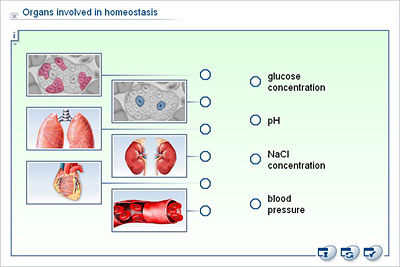the effects involved with the homeostasis Homeostasis all living organisms must maintain their internal body conditions constantly without changing it with the environmental conditions homeostasis is essential for life because most of the regulatory mechanisms of many advanced organisms (vertebrates) are involved and maintained by.