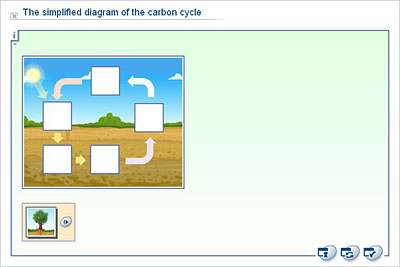 Biology upper secondary ydp whiteboard exercise the the simplified diagram of the carbon cycle ccuart Choice Image