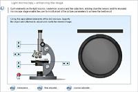 Light microscopy – enhancing the image