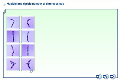 Diploid Number Of Chromosomes