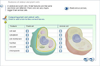 Features of animal and plant cells
