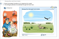 Energy flow and food chains