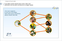 A typical food web