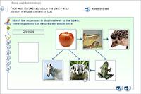 Food web terminology